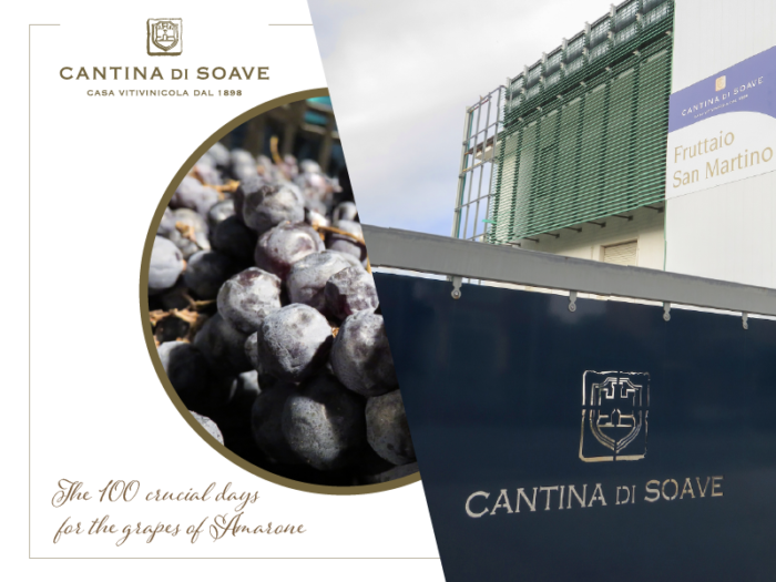 The 100 crucial days for the grapes of Amarone